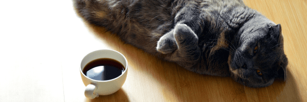 Why Am I So Tired – Could it be Adrenal Fatigue?