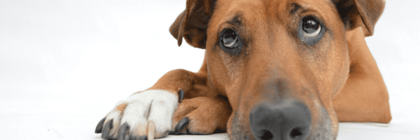Why am I dog tired – Could it be Low Thyroid?