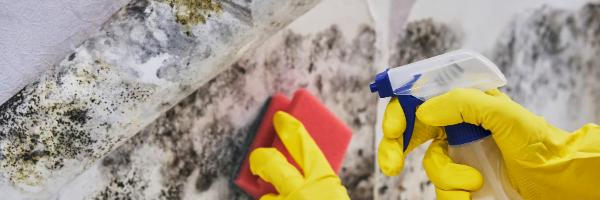 Mold and Biotoxin Results – Diagnosing CIRS
